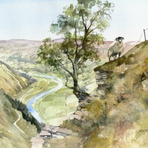 lone sheep above swaledale (L)