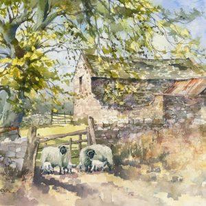 Wensleydale Spring (L)